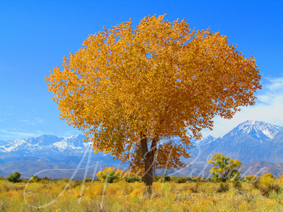 First Snow in Owens Valley